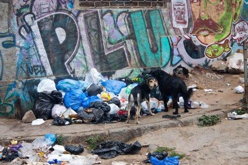 Chile - street dog 4