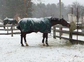 Snow-light!