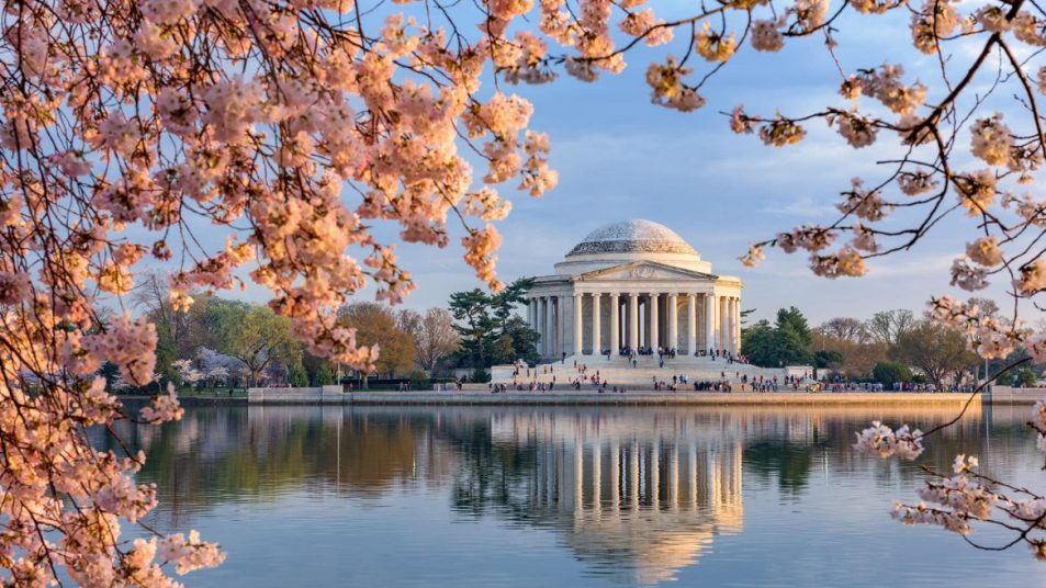 Best 5 Places to See the DC Cherry Blossoms in 2018