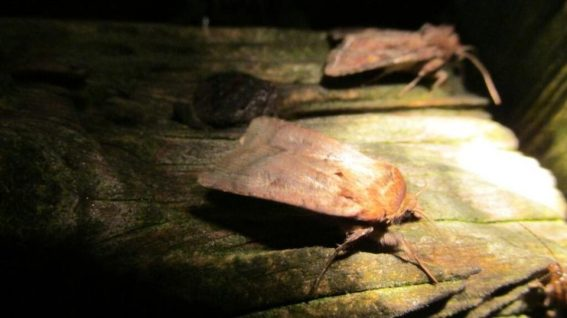 Nachtvlinders