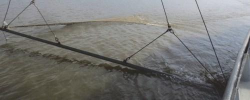 Monitoring van de visgemeenschap in het Zeeschelde-estuarium. Ankerkuilcampagnes 2018