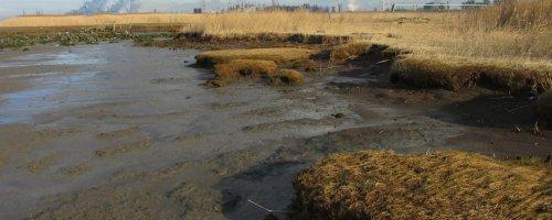 De evolutie van slikken, schorren en ondiepwatergebieden
