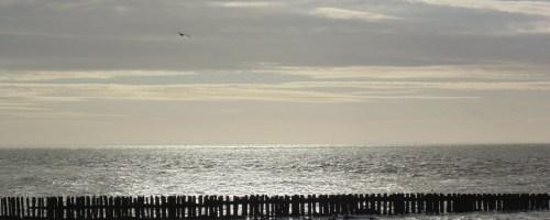 Hoe gezond is onze Noordzee?