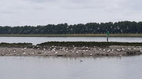 20180624--rotterdam--olielekkage--foto-ard-quack--006