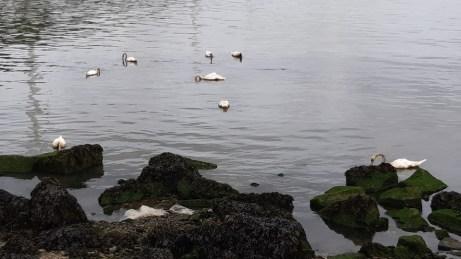 20180624--rotterdam--olielekkage--foto-ard-quack--008.jpg