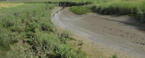 Kustmoerassen zijn een troef tegen stijging van de zeespiegel