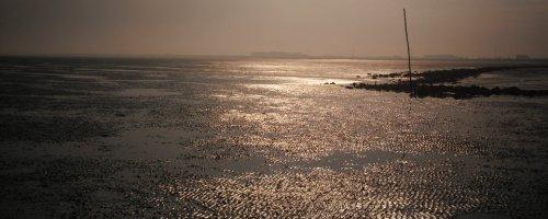 Ecologisch onderzoek in de Nederlandse delta's