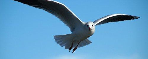 Wat drones kunnen leren van meeuwen