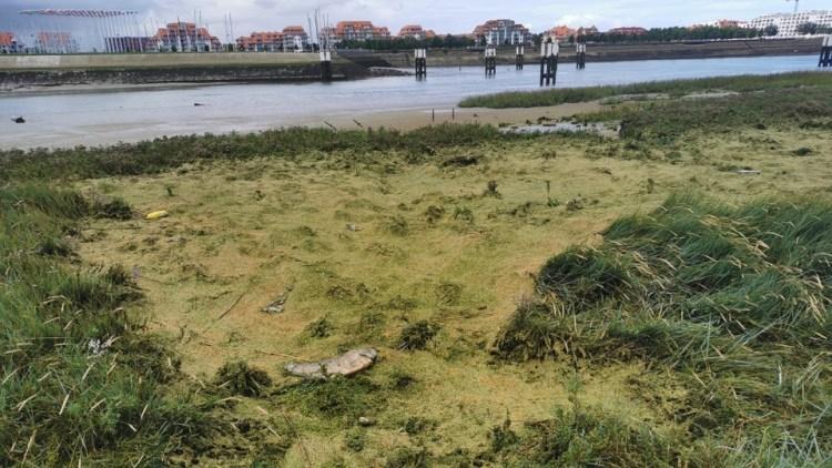 Natuurgebied de IJzermonding in Nieuwpoort stinkt naar rottende vis
