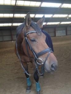 En træt hest :-)