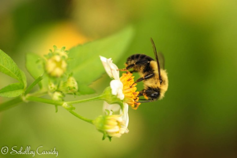 busybee (3)