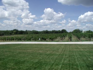SchillingBridge Winery grapevines