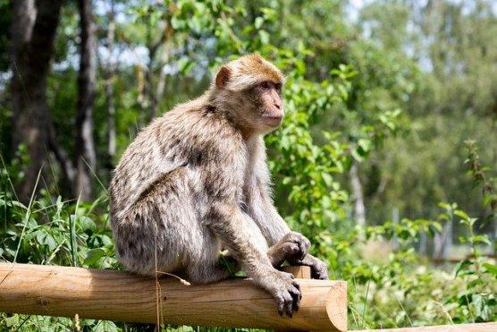 Im Erlebnispark Donnersberg gibt es Affen. Programm für Kinder aus Bad Kreuznach, Bingen, Ingelheim