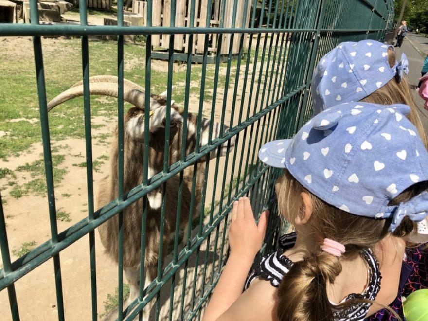 Tiere im Wildpark Mainz-Gonsenheim darf man füttern.