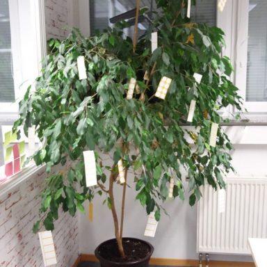 Mit Bogenetiketten beschmückte Topfpflanze zu Weihnachten