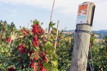 1-Obstplantagen-am-Juckelsberg