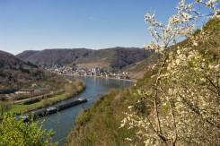 Buchsbaum-Wanderpfad (4)