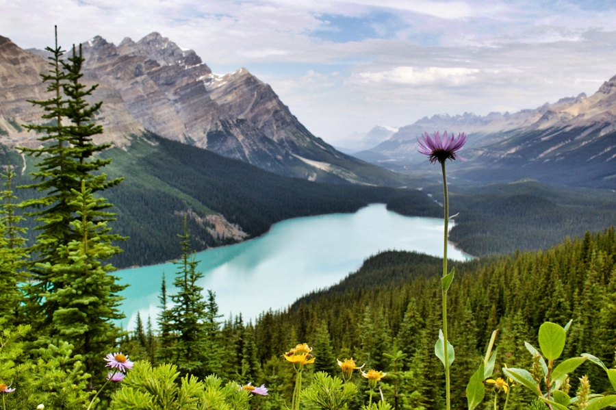 Peyto Lake Alberta, Canada  Wildflowers