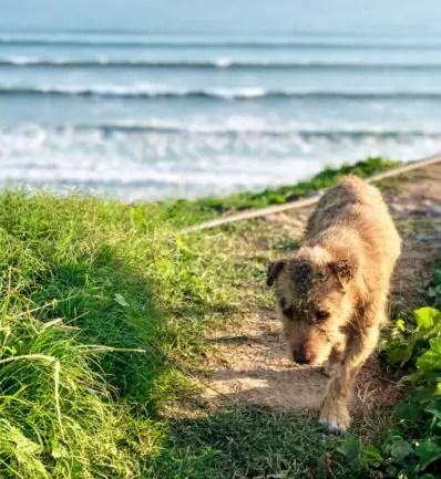 Pups of Peru| Miraflores