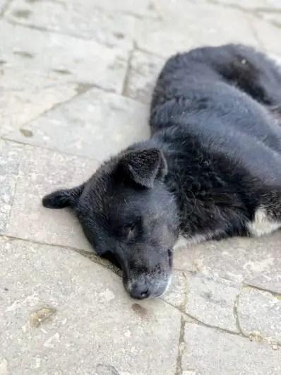 Pups of Peru| Machu Picchu