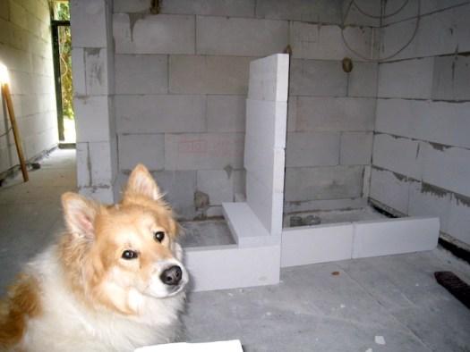 Fiona unser Baustellenhund