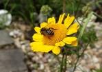 Die richtigen Pflanzen für Bienen