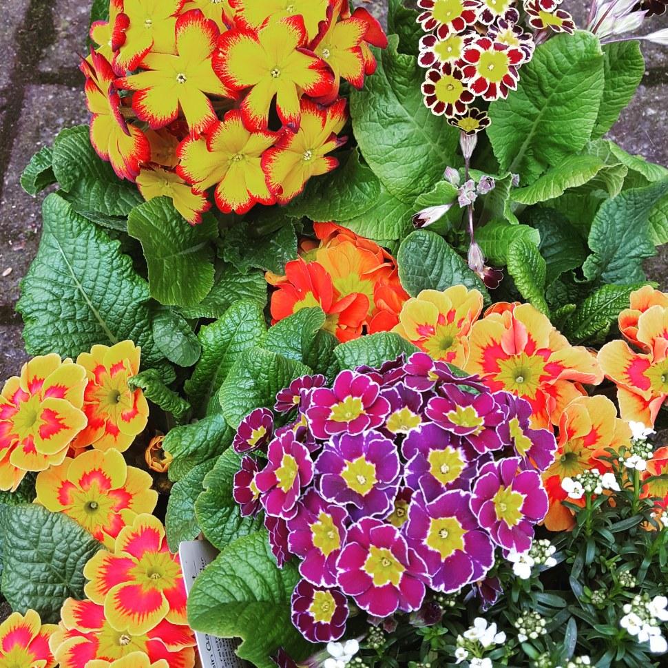 Ein Schmetterlingsgarten kann auch wunderschön aussehen.