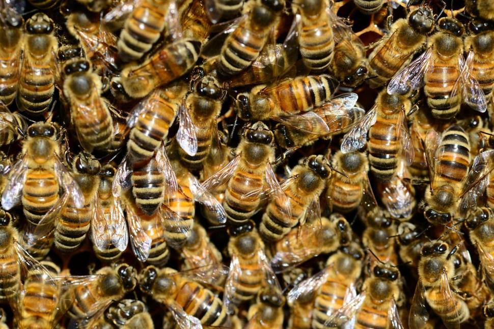 Beim Livestream Bienen kann man gleich mehrere Bienenvölker beobachten.