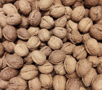 Fresh Walnuts In Shell