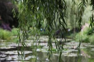 Parc de Claude Monet (16)
