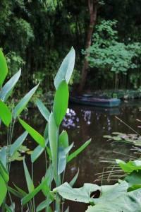 Parc de Claude Monet (20)