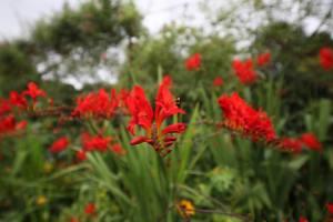 Parc de Claude Monet (6)