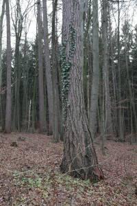 Söhrer Forst (7)