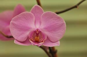Orchidee I (2)