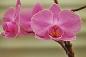 Orchidee I (4)