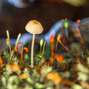 Der-Pilz-und-die-Sporen-1200px