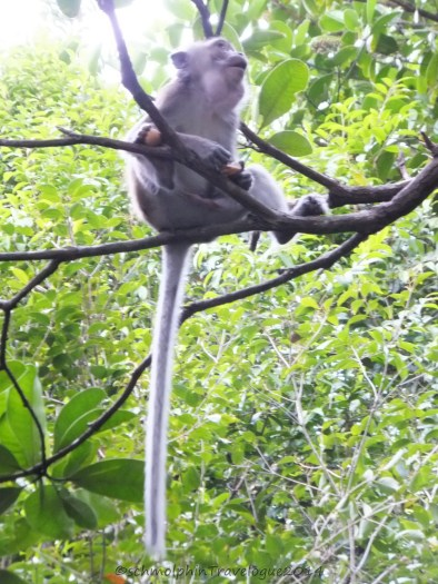 Shangri-La's Nature Reserve - Macaque sitting on a branch