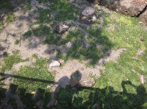Pulau Ubin Chek Jawa Mangrove Shadow