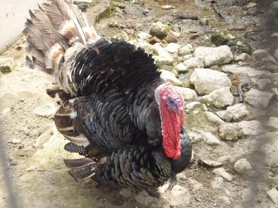 Cameron Highlands Butterfly Farm - Turkey