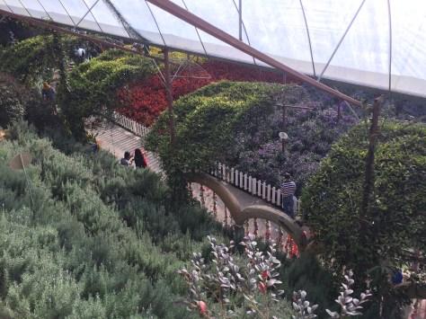Cameron Lavender Garden - Beautiful View