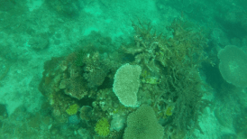 DSD at TARP, Sabah with Diverse Borneo More Corals and more