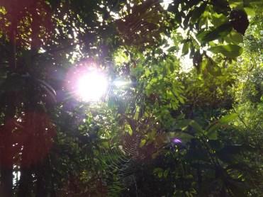 Sun rays through Spider Websduring Morning Jungle Trekking in Kampung Sukau Forest near Sukau Evergreen Lodge Kinabatangan