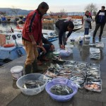 Explore Canakkale, Turkey – Fisherman's catch of the day