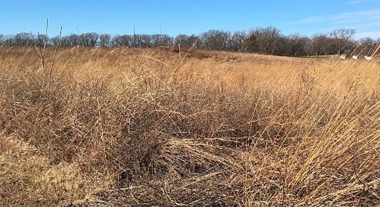 Tallgrass Prairie at Fort Bellefontaine County Park