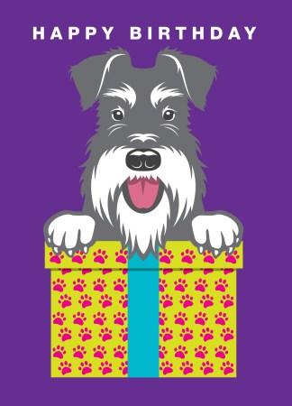 birthday card with present salt and pepper schnauzer purple background
