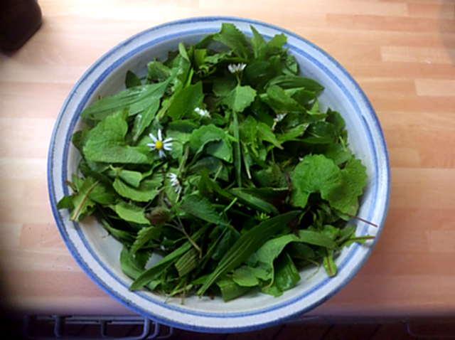 3.5.16 - Grüne Nudeln,Bärlauchpesto,Wildkräutersalat  (5)