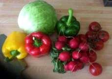 7.5.16 - Schollenfilet,Salaat,Kartoffel,pescetarisch (5)