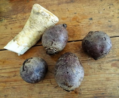 Meerrettichquark,Rote Beete,Ei,Salat,Pellkartoffeln (6)