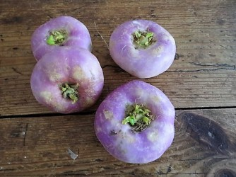 Navets,Kartoffelgratin,Salat (6)