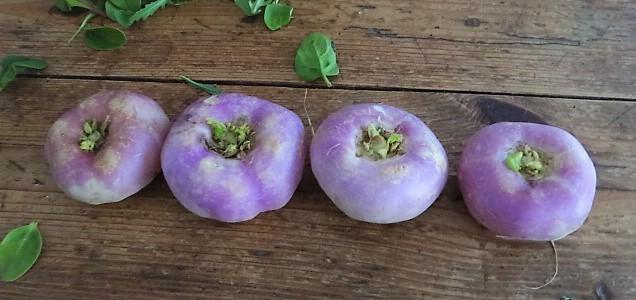 Navets,Kartoffelgratin,Salat (8).JPG